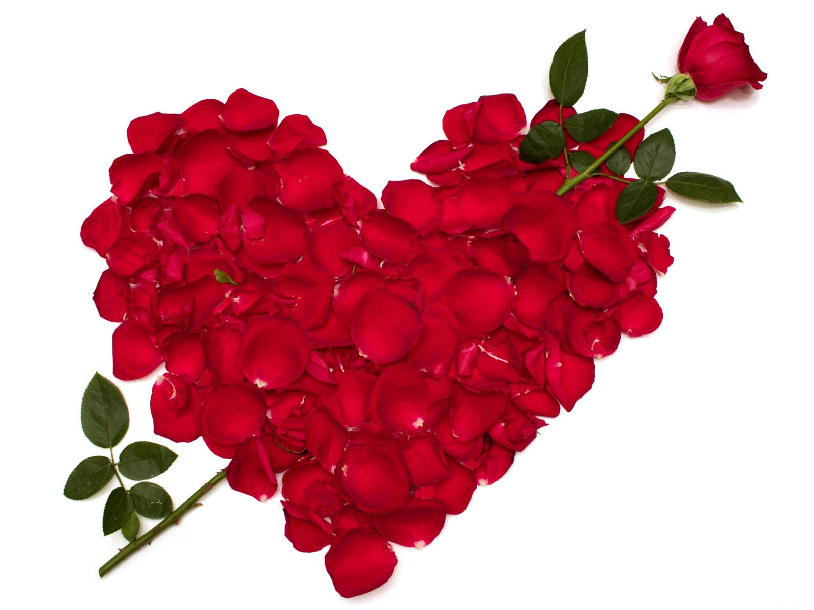 Love-Rose-06